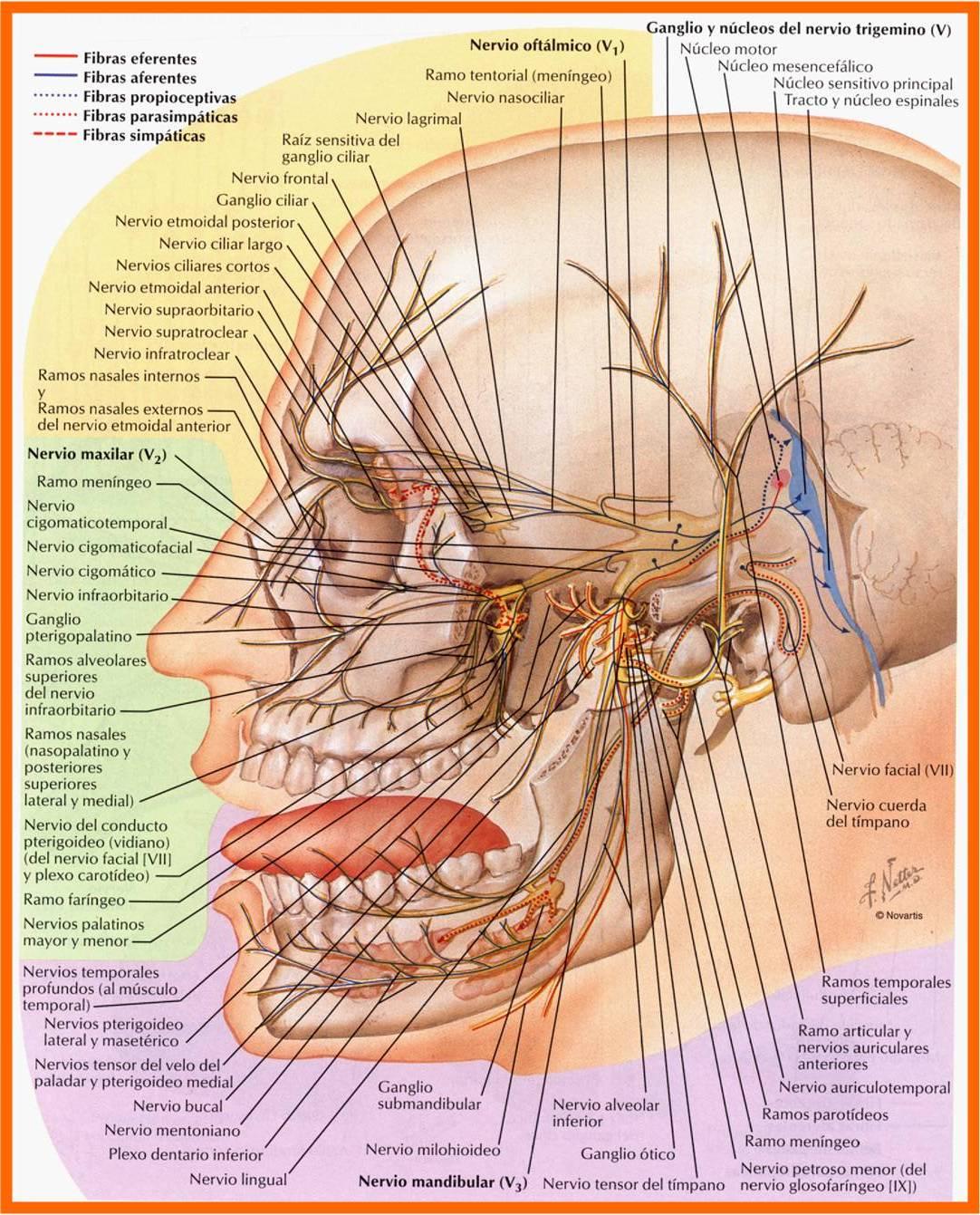 Bruxism, Bruxismo &TMJ, ATM. Dolor Orofacial. Dr. Rey Gil 983372504 ...